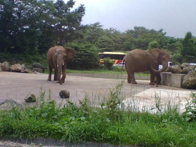 ここんちの象は